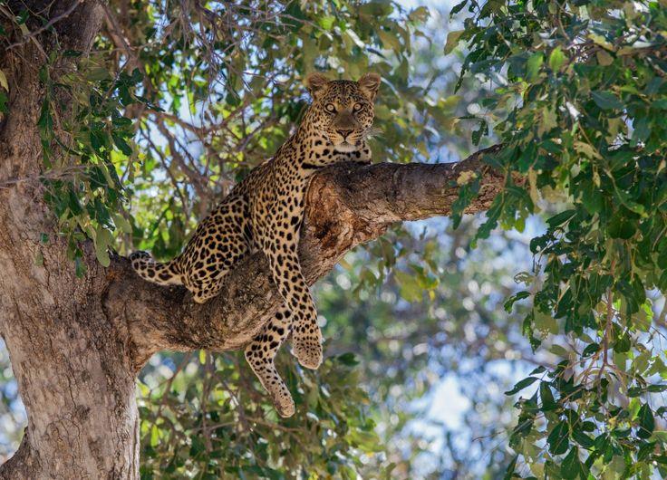450 besten Leopard and Jaguar Bilder auf Pinterest | Jaguar ...