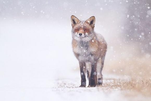 Winter flurries.