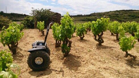 Visita con Segway entre viñedos http://www.enoturismoegurenugarte.com/actividades/segway/