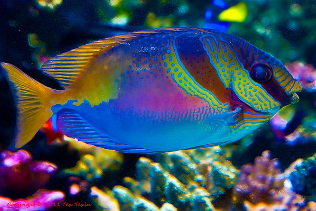 Colorful Ocean Fish | Colorful fish at Monterey Aquarium ...