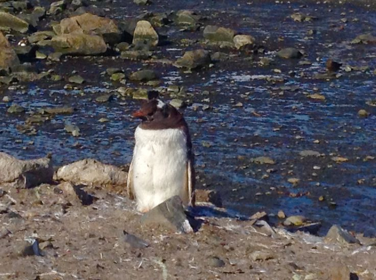 #Antartica Penguin. So close but can't touch.
