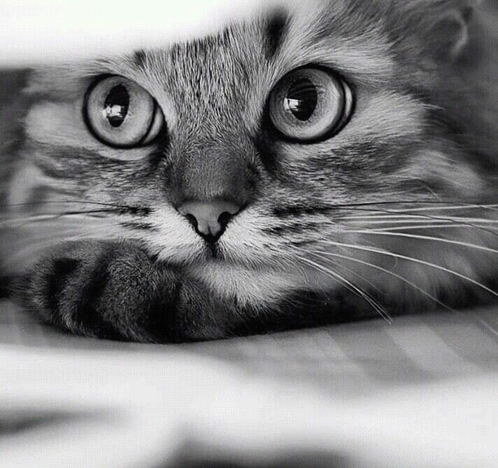 Картинки с задумчивыми котами