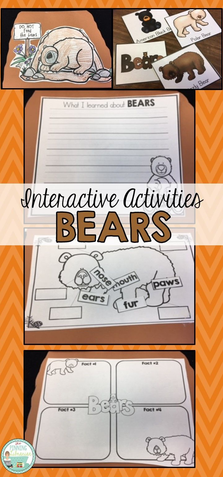 Interactive activities in a foldable booklet will give your students many different ways to learn about bears. Students will enjoy putting together their own bear cave flip book!