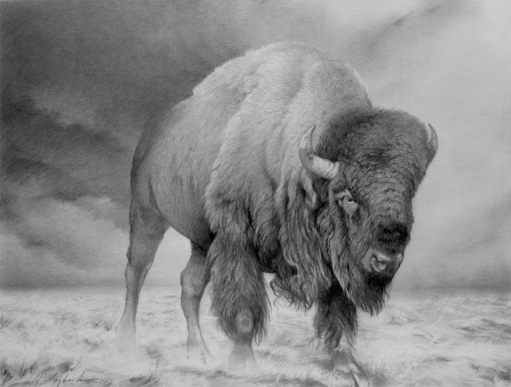 Bison By Peter Heydeck Art Animal Drawings Wildlife Art
