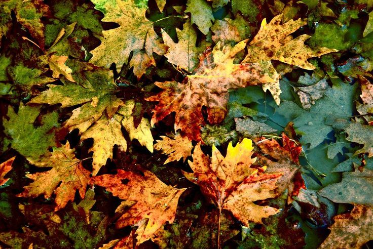 Dead leaves ... Photo by Menis Tselentis — National Geographic Your Shot