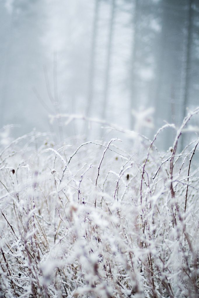 Frozen shrub in wintry forest | winter . Winter . hiver |