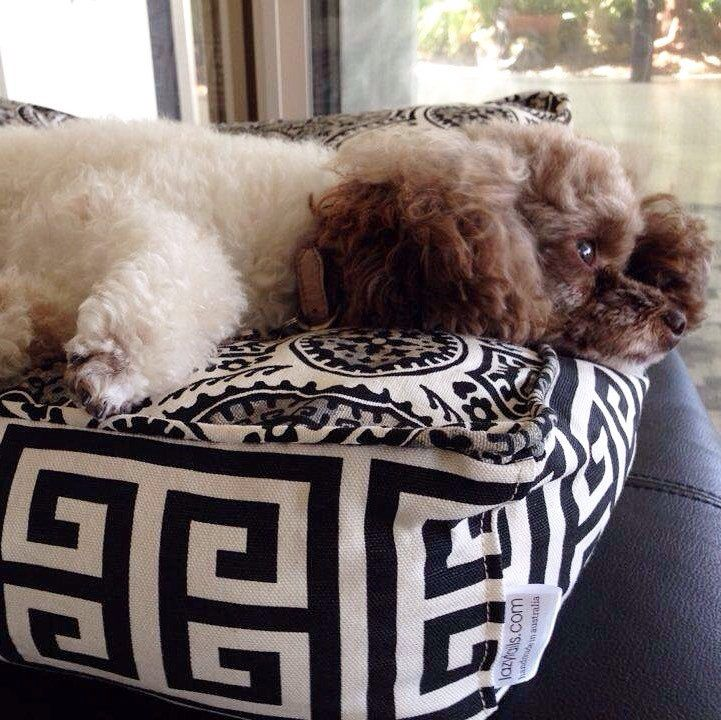 Bunni B the poodle  having a lazy tails afternoon.