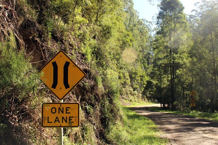 1/52 :: One Planet, Great Otway National Park. Image by Linda McCormick
