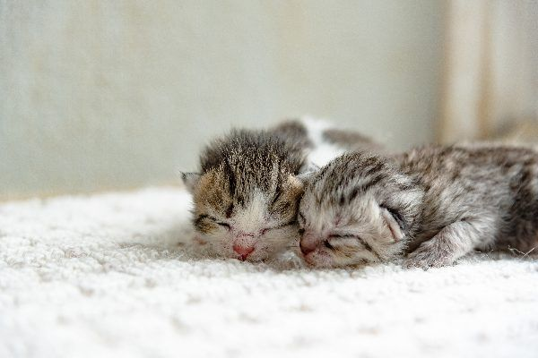 Kitten Facts 22 Things To Know To Keep Them Thriving Baby Cats Kittens Raising Kittens