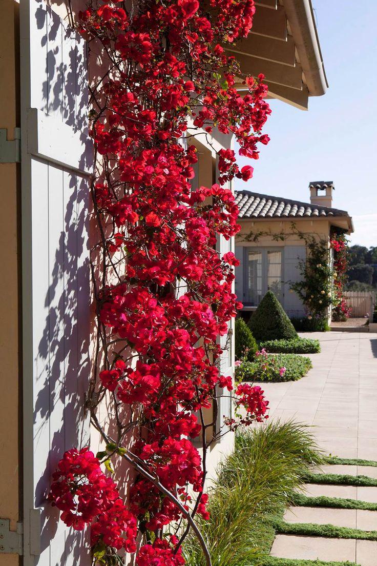 8 Fast Growing Climbing Plants Climbing Flowering Vines