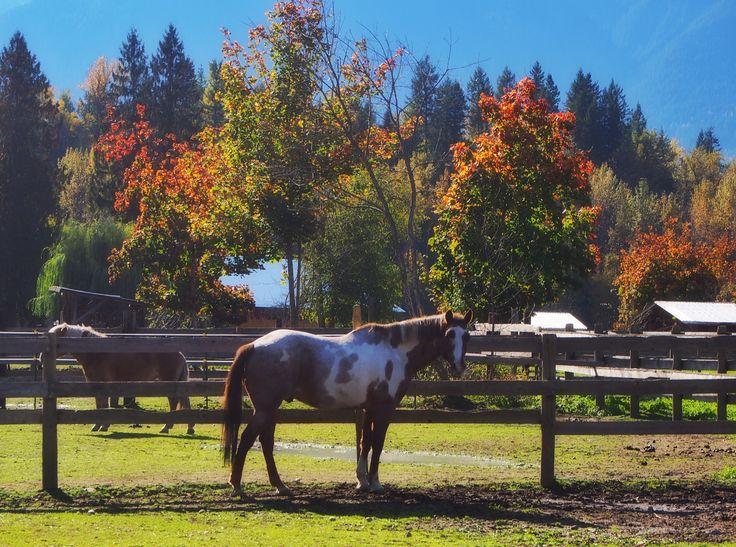 Equestrian grounds Revelstoke 🍂