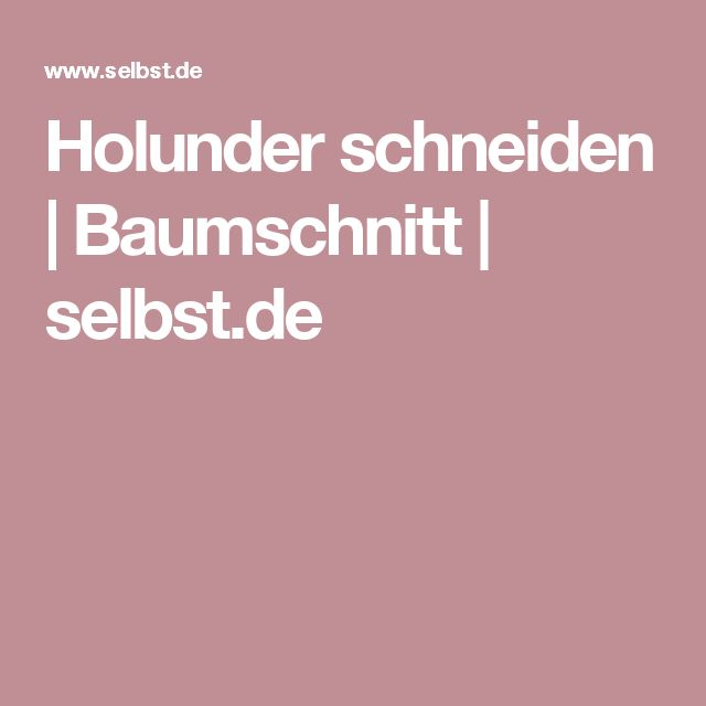 Holunder schneiden | Baumschnitt | selbst.de