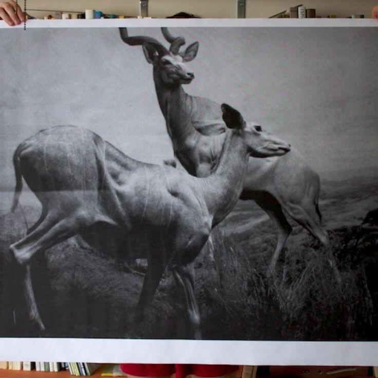 Antelopes Poster | DEBBIE CARLOS SHOP