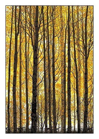 yellow and orange , Trees in the fall