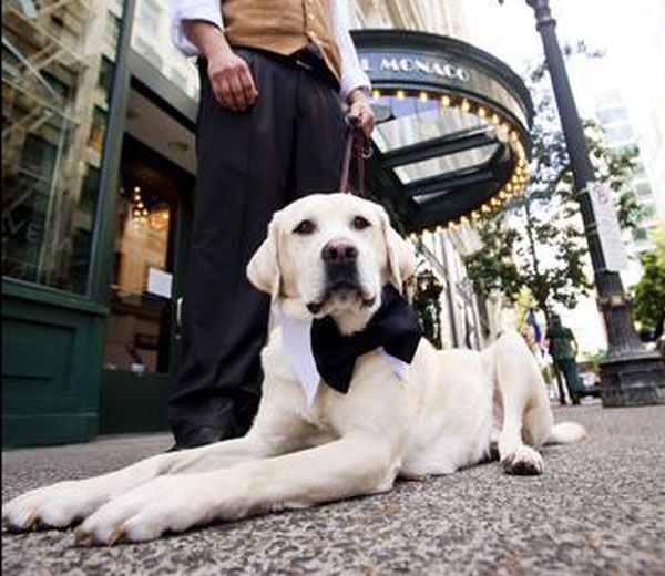 The 5 Best Dog Friendly Hotel Chains In U S Dogster