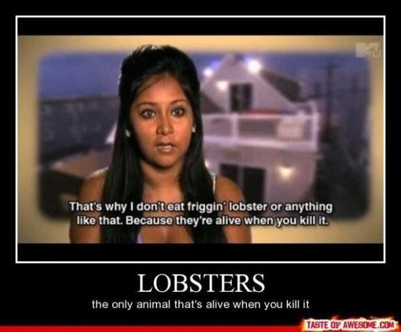 thats why I dont eat any animals. Or humans.Laugh, Funny Pictures, Jersey Shore, Quote, Lobsters, Funny Stuff, Snooki, People, Animal