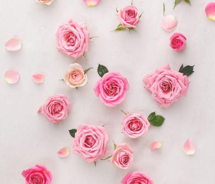 Menakjubkan 17 Wallpaper Wa Untuk Perempuan Gambar Bunga Untuk Wallpaper Whatsapp Wallpaper Hq Collections 100 Wallpaper Keren W Di 2020 Bunga Mawar Ungu Mawar Pink