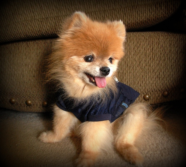 Jersey Cute animals, Cute animal pictures, Baby dogs
