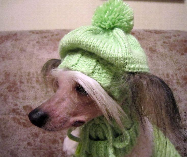 Купить Вязаный комплект для фотосессии: шапка + шарф для собачки - зеленый, шапка для собаки