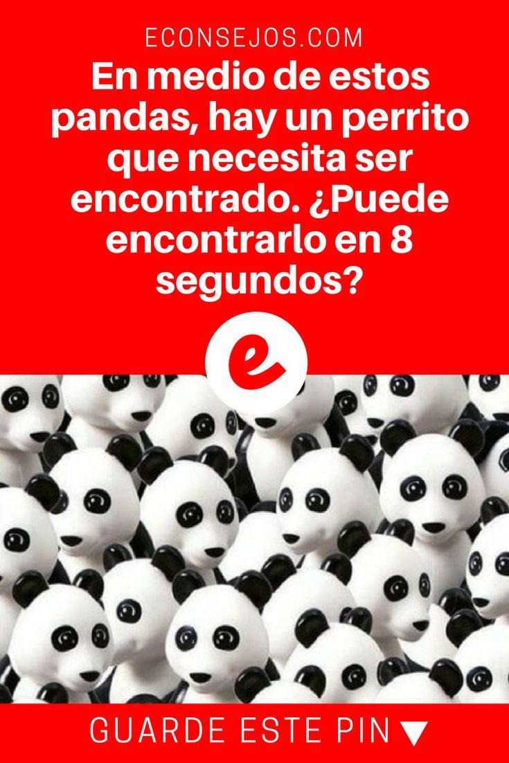 Test visual | En medio de estos pandas, hay un perrito que necesita ser encontrado. ¿Puede encontrarlo en 8 segundos?