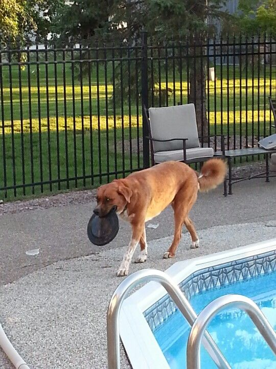 Diego with Frisbee by Pool