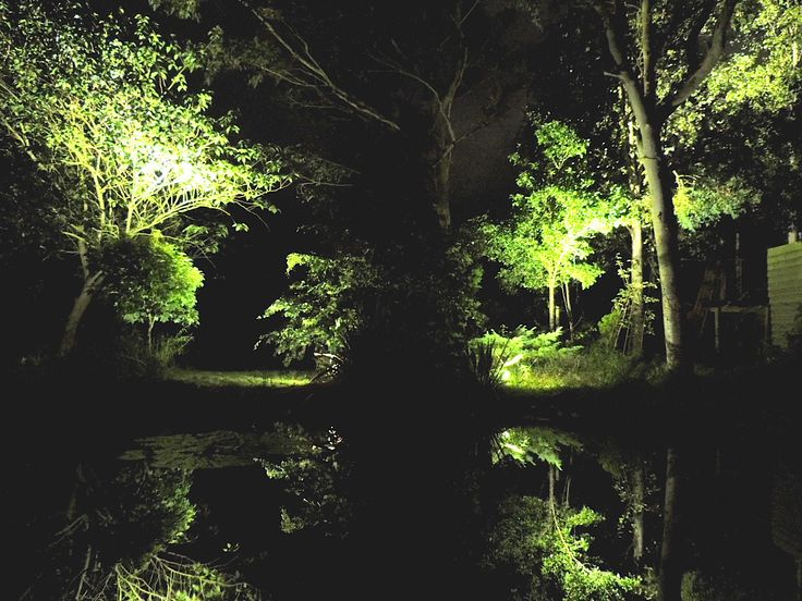 Landscape lighting around pond at The Coach House.