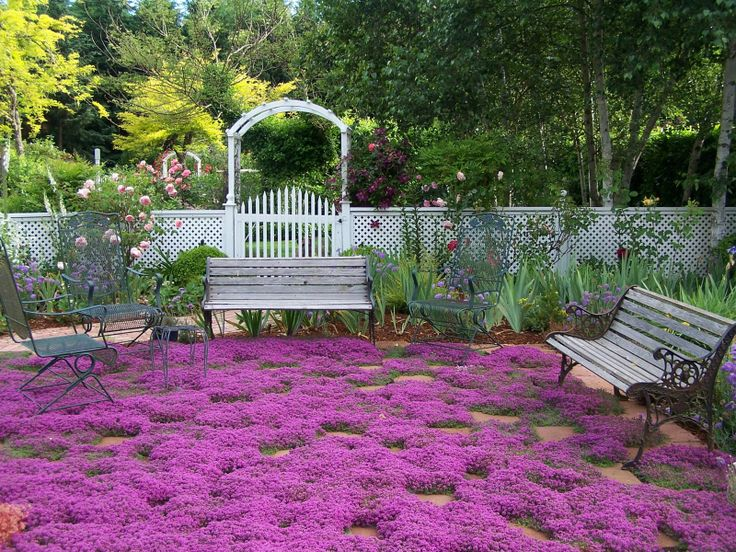 """Creeping thyme. - """"part shade"""" flower ground cover. Blooms after Iris's. Mixing with snow in summer for all over shade garden ground cover."""