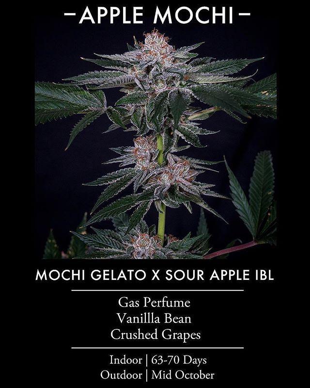 Pin on Cannabis seeds
