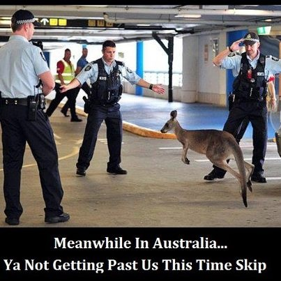 Melbourne airport.  Jan 2013. True.  No wonder people think kangaroos are hopping down the main streets. Lol.  Classic. Only in Australia.