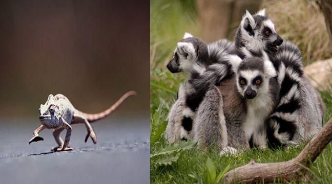flora del mundo - La hermosa isla de Madagascar se hace notar por su riqueza natural, pues en la mayor parte de las veces tiene especies únicas en la isla, que no se encuentran en ningún sitio.
