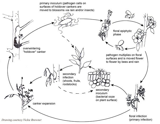 cultural control of pathogenic fusarium spp essay Control trials on the basis of their antifungal fusarium spp is an important soil-borne disease were identified according to traditional cultural and micro.