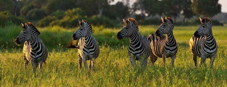#africanluxury #keepdiscovering #eyeswildopen #travel #travelagency #traveltheworld #africa #experience #botswana #onceinalifetime #afrika #reizen #reisdewereldrond #luxereizen #luxurytravel