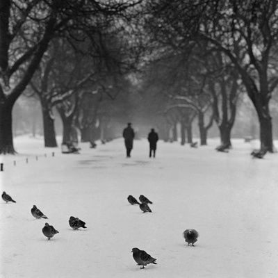 Regent's Park London Pigeons on a Snowy Path with People Walking Away Through an Avenue of Trees  John Gay