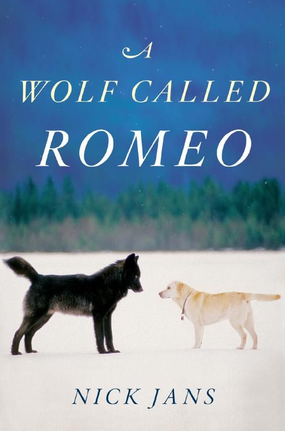 Photo of the book jacket for A Wolf Called Romeo by Nick Jans