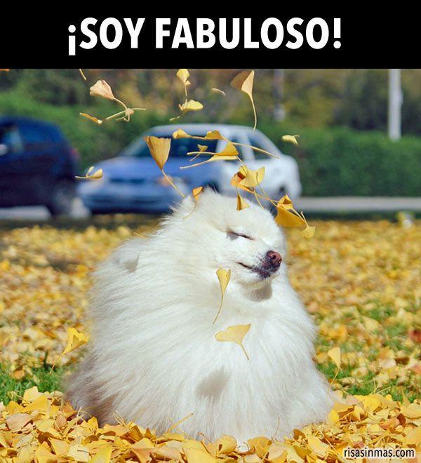 ¡Soy Fabuloso!. #humor #risa #graciosas #chistosas #divertidas