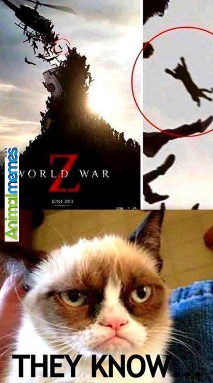 Cat memes Grumpy cat has been spotted... | Cat Memes ...