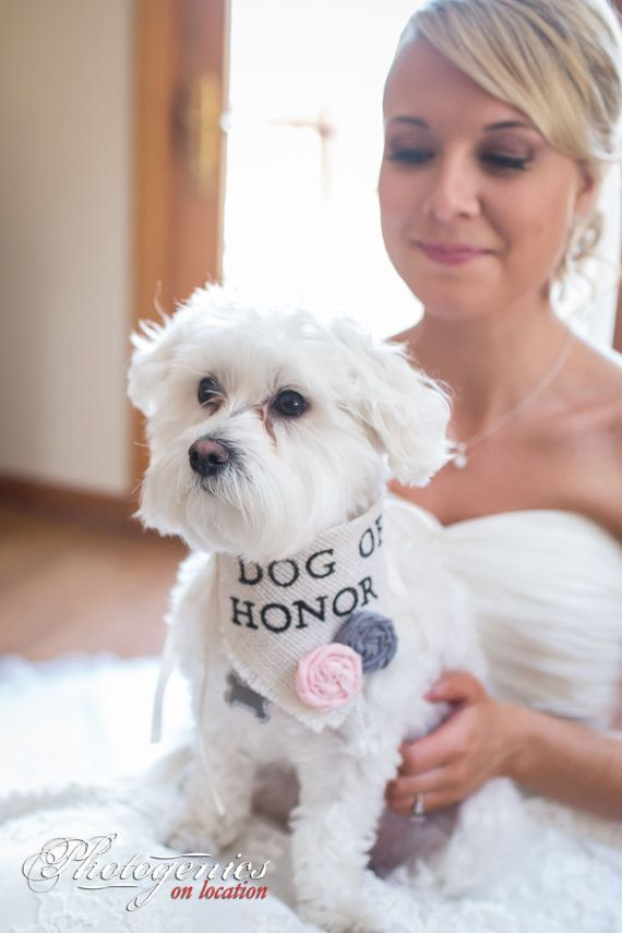 about fur baby on pinterest wedding day my wedding and dog wedding