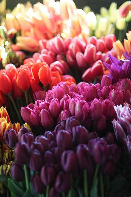 tulip colors - love this as color palette for both ceremony and decor (can always use reception lighting to enhance/darken colors)