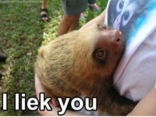 Rape sloth original - photo#51