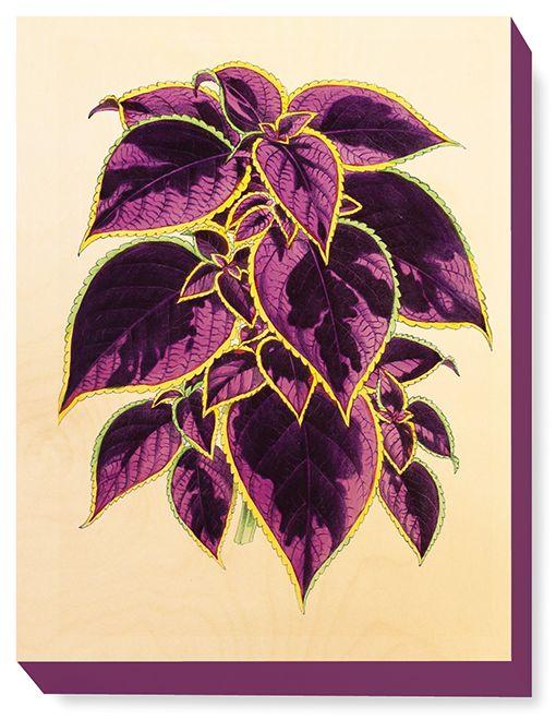FLW 040 Vintage Flower Coleus