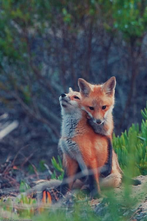 """Foxes, The one in front: """"I Thank God every day, that we have each other."""""""