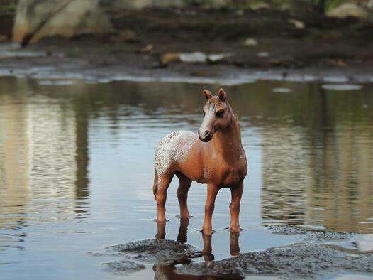 Hanoverian Horse Fun Facts