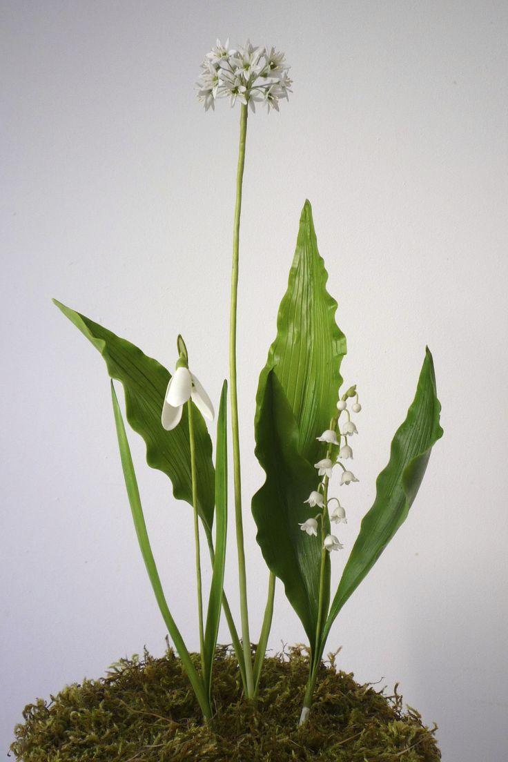.....Galanthus nivalis - Hóvirág .....Allium ursinum - Medvehagyma  .....Convallaria majalis - Gyöngyvirág