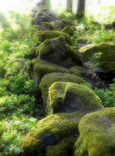 Like A Fairytale - Mossy Swedish Forest