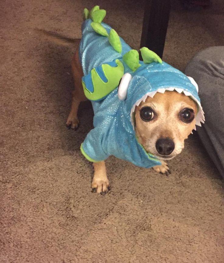 Tiki the ferocious Dragon