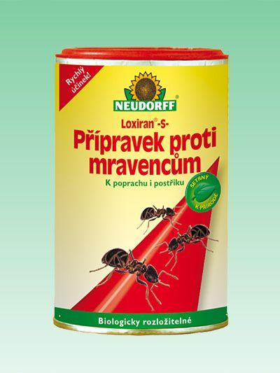 Každoroční invaze mravenců je tu! Jak na mravence vyzrát?