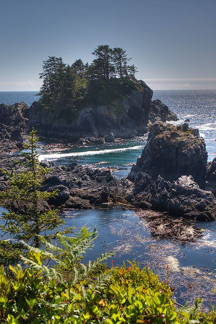 A lovely sunshine filled shot of the Pacific Rim Trail, Tofino British  Columbia.