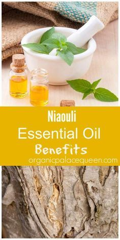 niaouli essential oil benefits