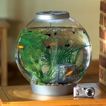My baby's first fish bowl with guppies! This would be in their bedroom next to the chair