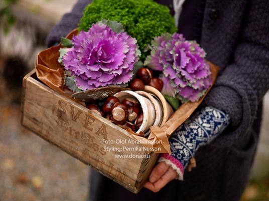 dona blogg: Hemma-hos-reportage och höstplantering